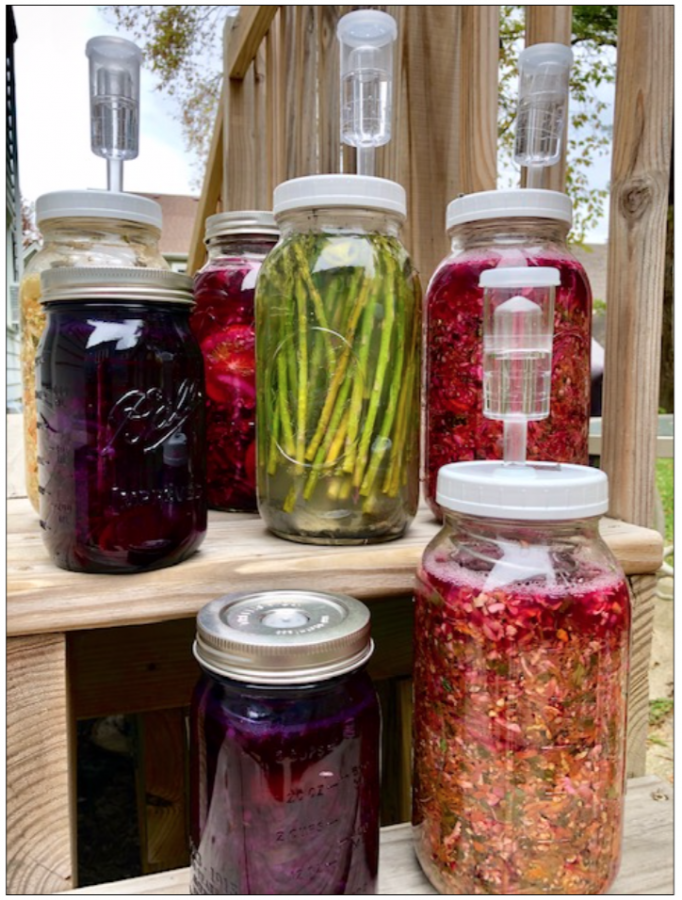 Some of the author's fermenting vegetables.